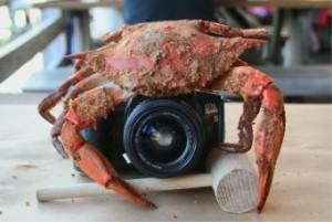 crabbycamera